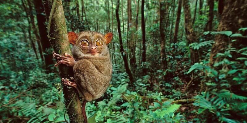 животные в Индонезии